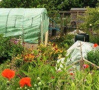 Allotment and polytunnel.