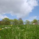 Farnham Park. Spring. Grass field. Trees in background. Blue sky.