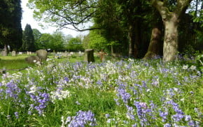 Blue and whitebells in foreground. Gravestones and trees in background. Cemetery