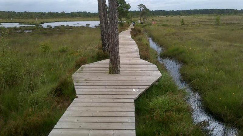 Elstead heath boardwalk