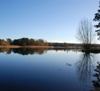 Large pond, trees on horizon and blue sky
