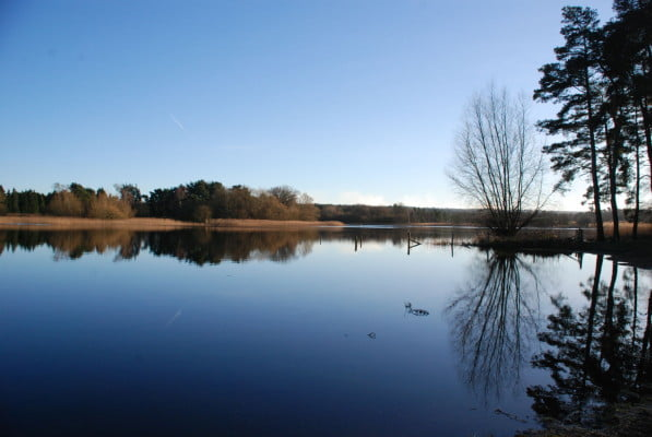 Large pond, trees and blue sky