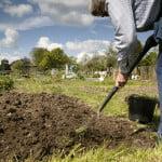 Farnham allotment. Man digging allotment.