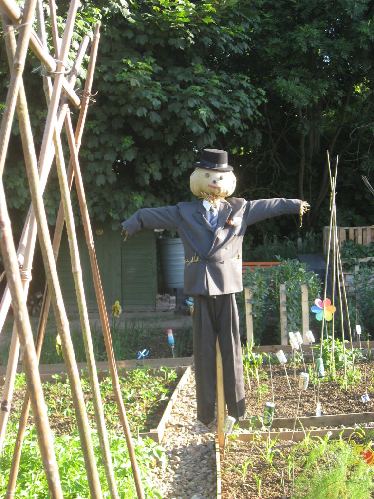 Scarecrow in a suit and hat in an allotment.