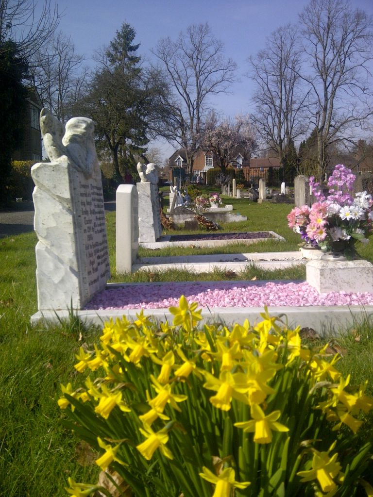 Daffodils in front of graves.