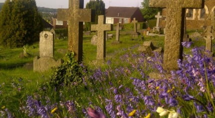 Cross shaped headstones at Green Lane Cemetery, purple wild flowers