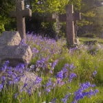 Cemetery, cross headstones, bluebells