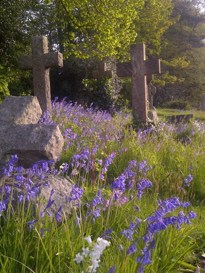 Cemetery, cross headstones, bluebells