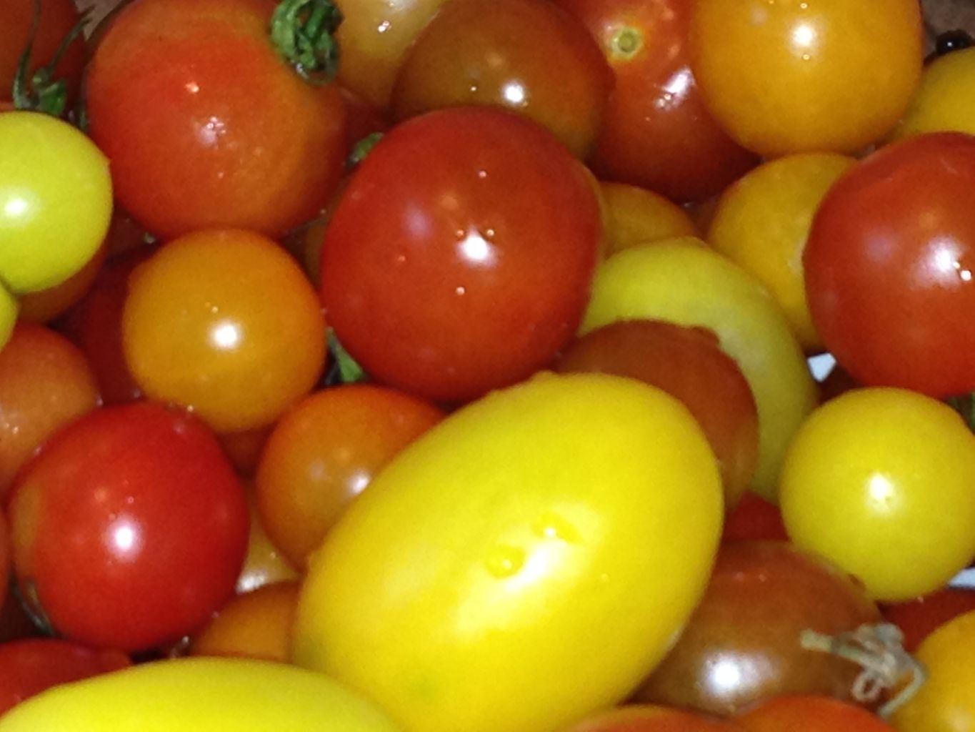 Red, orange and yellow tomatoes