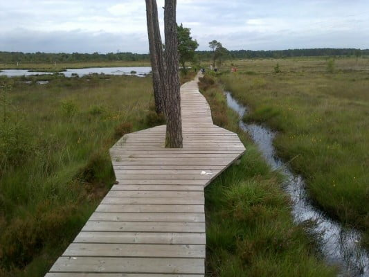 Elstead heath boardwalk
