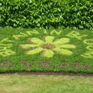Britain in Bloom spelled out with plants. © Farnham Town Council