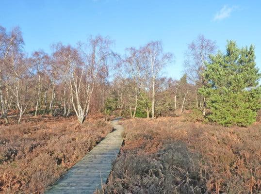 Frensham Great Pond accessible trail