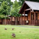 ducks on grass, wooden lodges in background