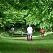 People, trees, running, walking, Park. © Jenny Bray