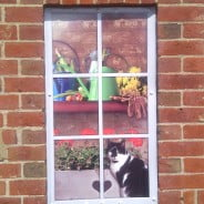 Drawing of black and white cat looking out potting shed window.© Farnham Town Council