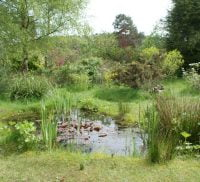 Small pond surrounded by grass and trees.