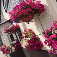 pink purple and white flowers in hanging baskets