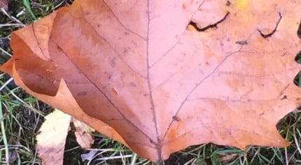 Brown autumn leaf on grass