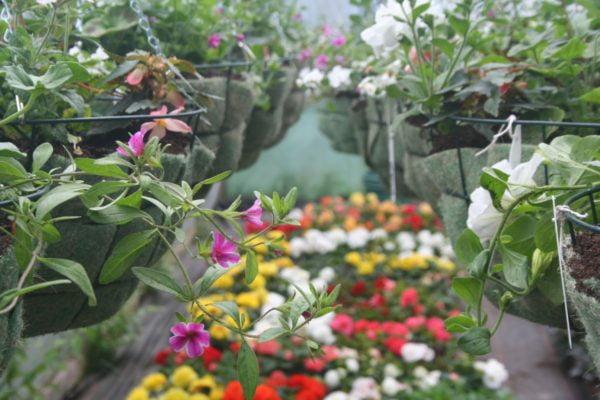 Farnham in Bloom Greenhouses