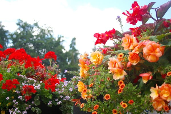 Red and orange flowers.
