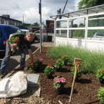 Graduate Landscapes planting out at Farnham railway station