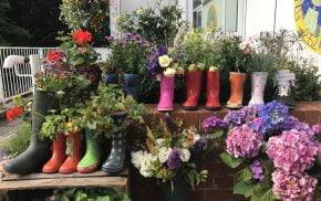 Plants growing in a display of Wellington boots.