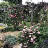 Pretty back garden