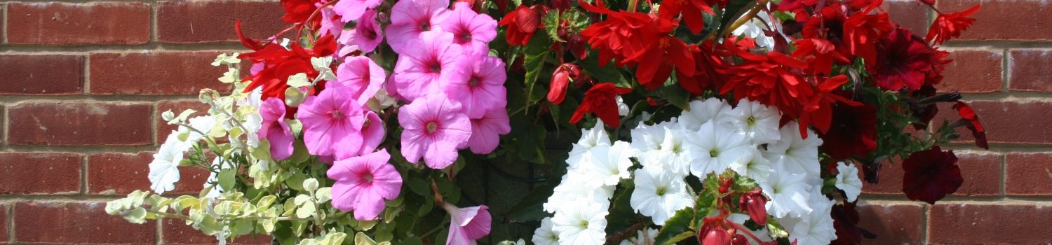 Large hanging basket filled with red, pink and white flowers.