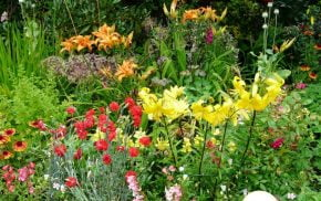 Flower bed with red, yellow and orange flowers.