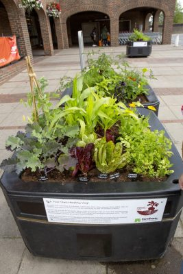 Mix of vegetables growing in two large containers in paved area of town centre.