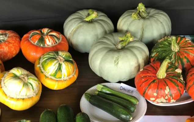 Green, orange and yellow squash and plates of green courgettes on a table.