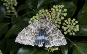Moth resting on a plant