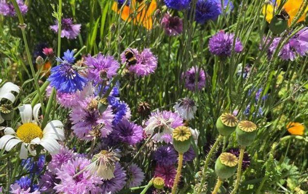 Bees on wildflowers