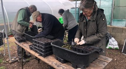 Female pricking out seedlings. Three people in background gardening.